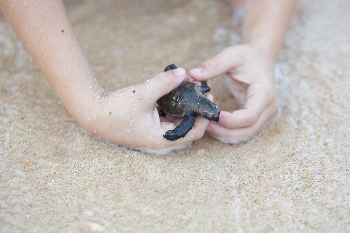 Kid playing with baby turtle