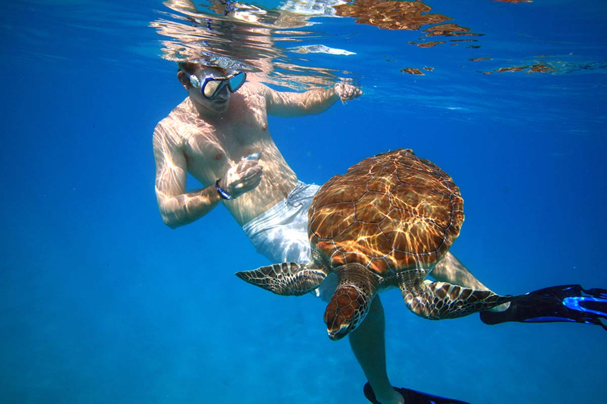 Swimmer playing with turtle in Barbados